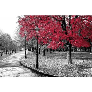 Big Red Tree 24 x 36 Print